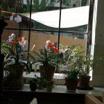 SW Blumen Lounge